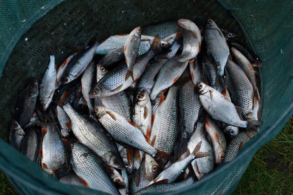 268b 13 12 2015 Limmen, HSV viswedstrijd Ron Droog