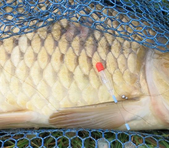 vissen met Dick en in de Beemster 030